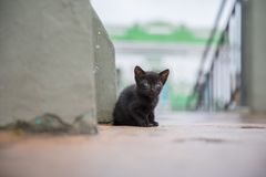 Abandoned cat in the street stock photography