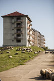 Abandoned blocks of flats. Color image of some abandoned blocks of flats Royalty Free Stock Images