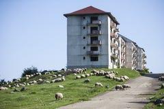 Abandoned blocks of flats Stock Photo