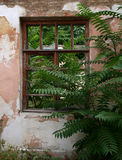 Abandoned brick house closeup. European abandoned house from brick closeup was overgrown with bushes and trees royalty free stock images