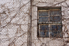 Abandoned building with dry creeper Stock Photography