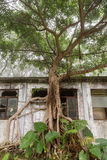 Abandoned building on Lantau Island in Hong Kong. Lush tree and old, abandoned building near the Ngong Ping village on Lantau Island in Hong Kong, China, viewed Royalty Free Stock Photography