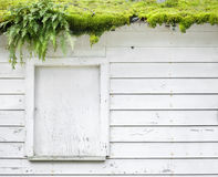 Abandoned building with moss  algae Royalty Free Stock Photos