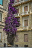 Abandoned building with purple plant Royalty Free Stock Photos