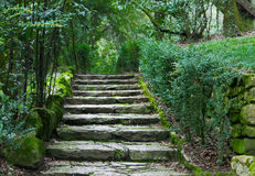 Abandoned building stairs. Ancient stone steps overgrown with moss.Italy Royalty Free Stock Photography