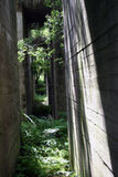 Abandoned bunkers. WWII concrete bunkers in the forest Royalty Free Stock Image