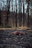 Abandoned bunny toy laying down on the ground in the forest. Lonely concept. International missing children`s day. royalty free stock photography