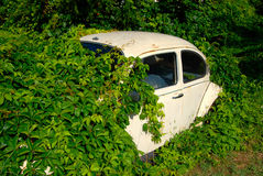 Abandoned car. Old car, abandoned and overgrown Royalty Free Stock Photography