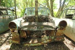 Tree growing from a car. The abandoned car cemetery hidden deep in the swedish woods. Nature is slowly taking control. One tree is growing from the car wreck Stock Images