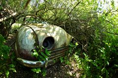 A wreck of a car overgrown with plants. The abandoned car cemetery hidden deep in the Swedish woods. Nature is slowly taking control Stock Photo
