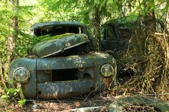 A wreck of a car overgrown with plants. The abandoned car cemetery hidden deep in the swedish woods. Nature is slowly taking control Royalty Free Stock Photo