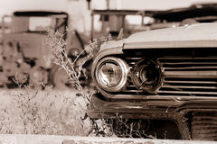 Abandoned cars Royalty Free Stock Image