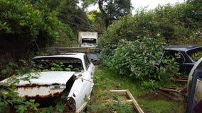 Abandoned cars Stock Image