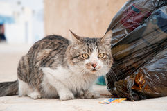 Abandoned cat Royalty Free Stock Image