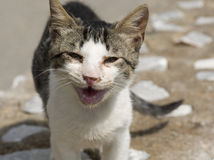 Abandoned cat Stock Image