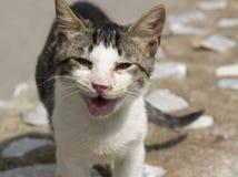 Abandoned cat. Abandoned crying cat with conjuctivitis Stock Image