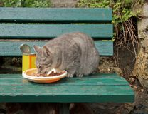 Abandoned cat fed on a bench Stock Photos