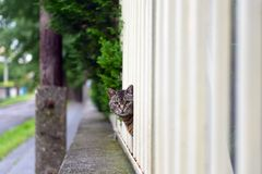 Abandoned cat outdoors Stock Photography
