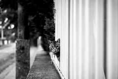 Abandoned cat outdoors Stock Image