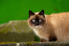 Abandoned cat outdoors Royalty Free Stock Photo