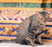 Abandoned cat Royalty Free Stock Photo