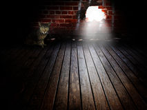 Abandoned cat Royalty Free Stock Images