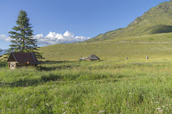 Abandoned cattle-ranch. Altai Mountains, Russia. Sunny summer day Stock Photos