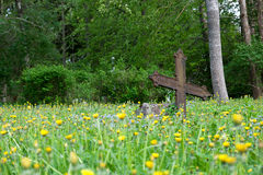 Abandoned cemetery. With rusty cross stock image