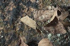 Abandoned cobweb Stock Photography