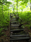 Abandoned Derelict Boardwalk. Abandoned, derelict boardwalk through boggy forest Stock Photo