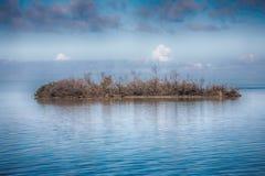 Abandoned, Desolate Island. An abandoned, desolate island full of dead trees in the Florida Keys Stock Photo