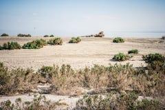 Abandoned dirty shoreline of the Salton Sea in Bombay Beach California on a sunny day. Abandoned dirty shoreline of the Salton Sea in Bombay Beach California stock photos
