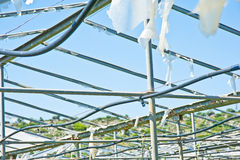 Abandoned, disused  greenhouse. Stock Image