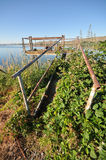 Abandoned dock overgrown by plants by lake Royalty Free Stock Photography