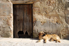 Abandoned dog Royalty Free Stock Image