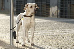 Abandoned dog Royalty Free Stock Image