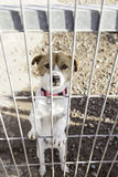Abandoned dog and caged Stock Image