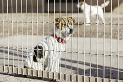 Abandoned dog and caged Royalty Free Stock Photo