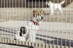 Abandoned dog and caged Royalty Free Stock Photo