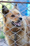 Animal shelter.Boarding home for dogs. Abandoned dog in the kennel,homeless dog behind bars in an animal shelter.Sad looking dog behind the fence looking out Stock Photos