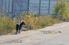 An abandoned dog looks right stock images