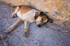 Abandoned dog lying on the ground with sad eyes Stock Photos