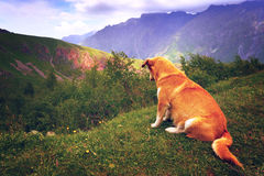 Abandoned doggy.Meditation, loneliness, grief. Royalty Free Stock Image