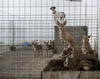 Abandoned dogs Stock Photography
