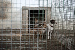 Abandoned dogs Stock Image