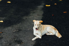 Abandoned dogs Royalty Free Stock Image