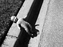 Abandoned doll curbside. Creepy abandoned doll on a curb Royalty Free Stock Image