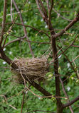 Abandoned empty nest Stock Photo