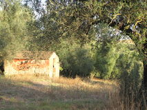 Abandoned farm among olive trees in Canino, Italy Royalty Free Stock Image