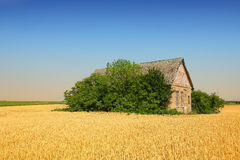 Abandoned farm in wheat field Stock Image